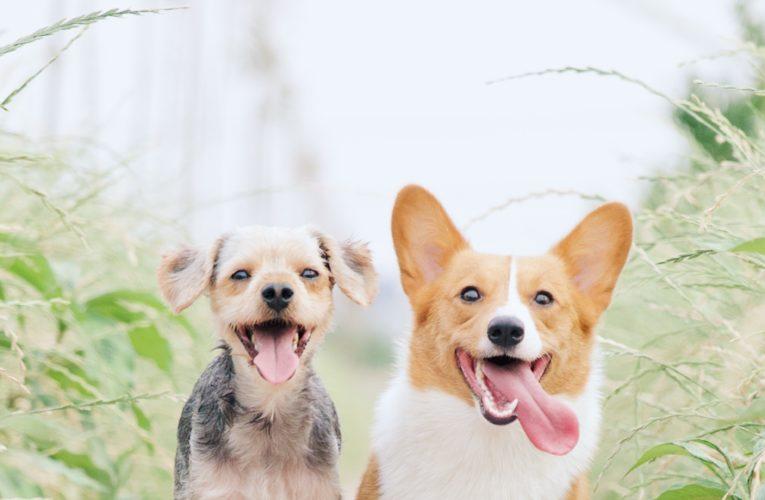 Preventing Home Dog Fights in Aurora